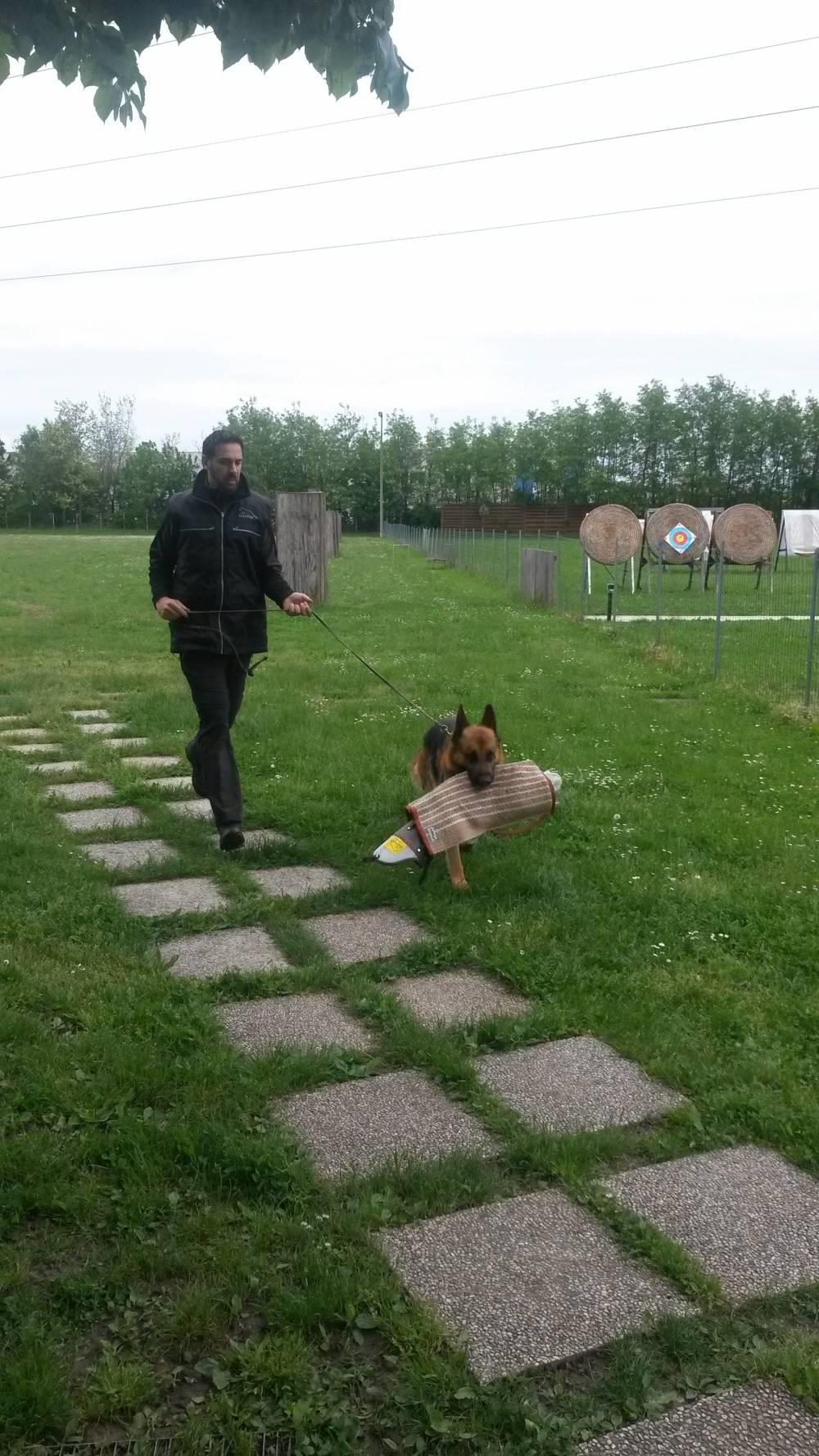 addestramento cani conegliano oderzo treviso vittorio veneto difesa