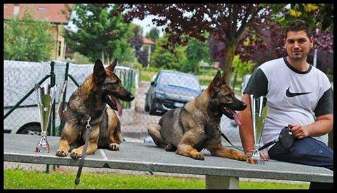 addestramento cani treviso conegliano oderzo