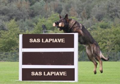 addestramento cani a conegliano